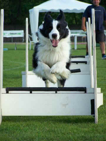ghess flyball.jpg (34718 byte)